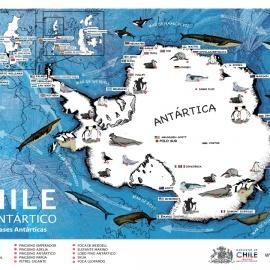 Aspectos legales y políticos de la Antártica previo al Tratado Antártico