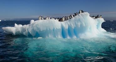 Control climático por fitoplnacton antártico